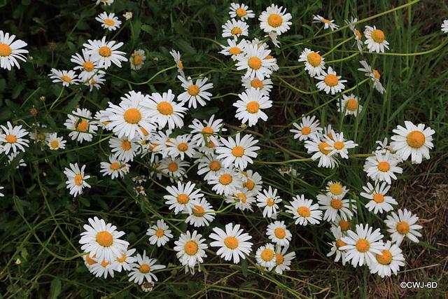 June Pond Garden Colours taken inbetween the monsoon downpours today