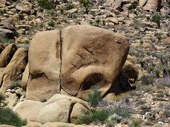Crown Prince Lookout - Live Oak Canyon Loop (5929)