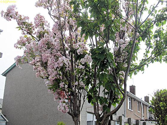 04 blossom