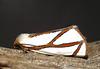 Thalaina angulosa (Angled Satin Moth)