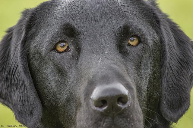 Besuch in einer Hundeschule