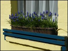 spring blue window