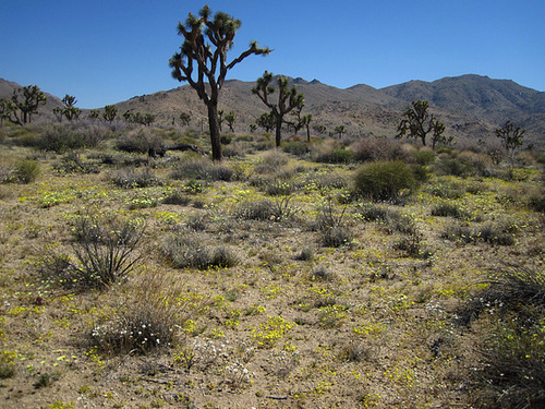 Desert Flowers (5857)