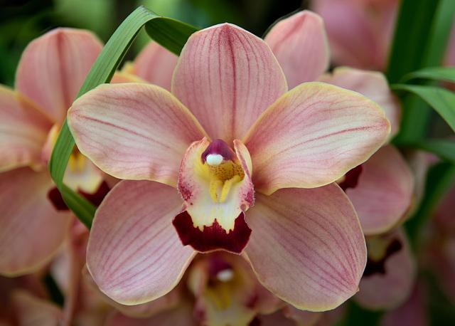 Orchid (d)