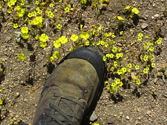 Pollen (5858)