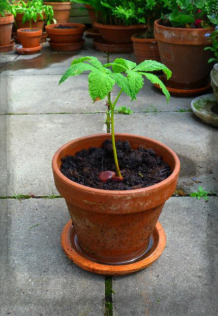 Ein Bäumchen pflanzen ....