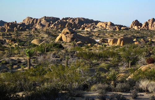 Jumbo Rocks (5907)