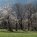 Frühling auf der Rohanschanze - 2014-03-31-_DSC1410