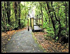 Swing bridge at Kaitoki Waterworks Park