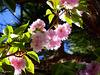 le printemps continue!