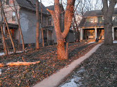A residential evening frontyard tree and sidewalk.