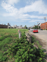 Scenes of treestumps and vacant lands of urban Denver.