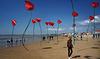 Coquelicots des sables [Châtelaillon-Plage - 2014]