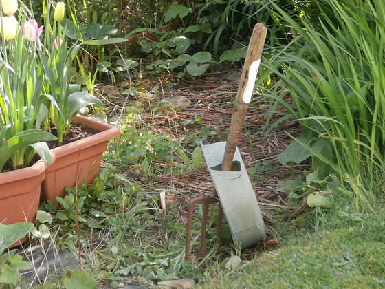 Am going to rake this tomorrow to then plant wild flowers