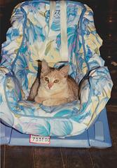 chat Cléopâtre