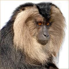 Portrait Wanderu (1)