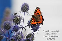 Small Tortoiseshell - East Blatchington - 3.9.2013