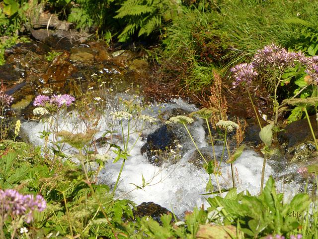 ... des ruisseaux fleuris...