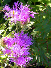 ... et des fleurs et plantes sauvages
