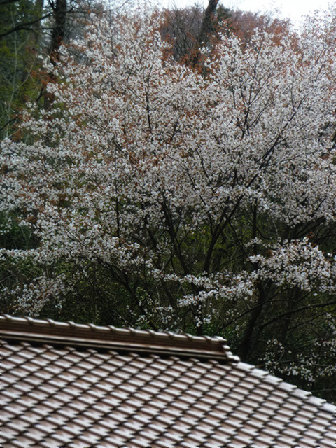 fukiya roof