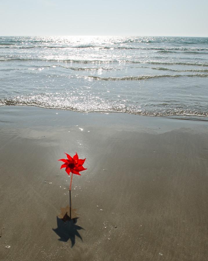 Face à la mer, je prends le vent de face