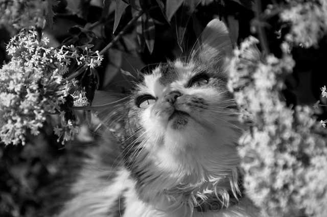cat looking at a butterfly