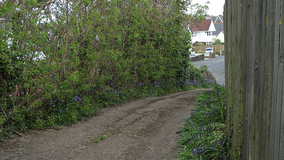 The bottom piece of the driveway with blue bells and lilac bushes edging it