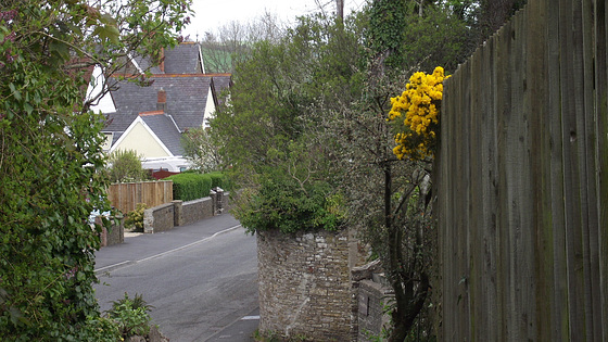 The bottom of my driveway with the gorse poking its head over the fence