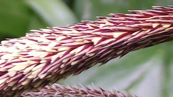 Strange grass flower