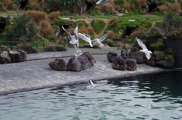 Parc aux oiseaux Villars les Dombes