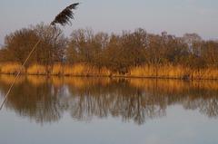 Un des mille étang de la Dombes