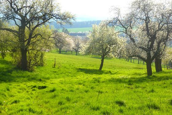 Der Frühling - la printempo - le printemps - the spring