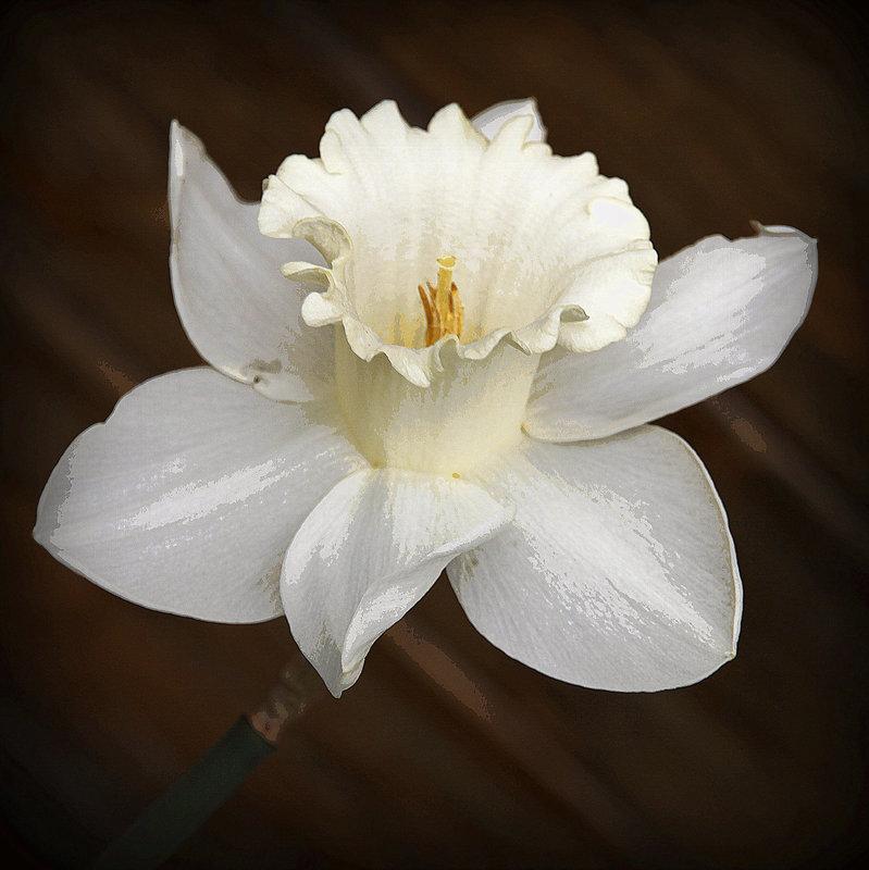 Une fleur par jour.... - Page 3 32088695.3197171b.800