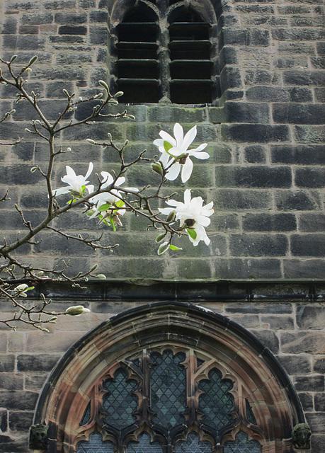 Church & Magnolia.