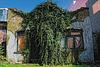 Dilapidated & Overgrown