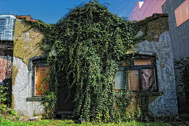 Dilapidated & Overgrown