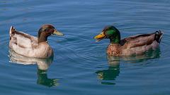 Q is for Quack