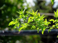Des feuilles de lumière...