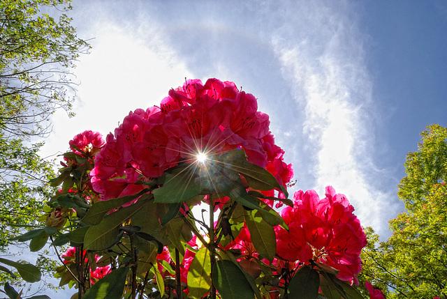 Bright Floral Hue with Sunburst