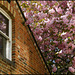 window in blossom
