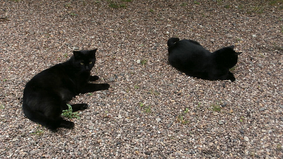 Pippin and Boo sharing the gravel