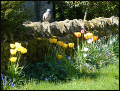 tulips by a stone wall
