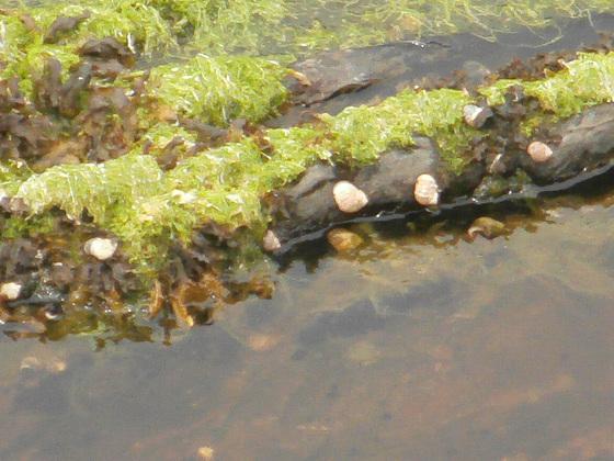 Lovely little rock pool
