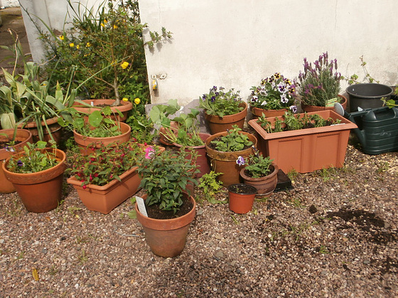 Some new pots all gathering together