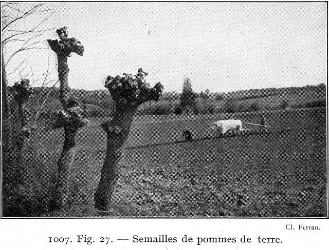1927semaillespommesdeterre