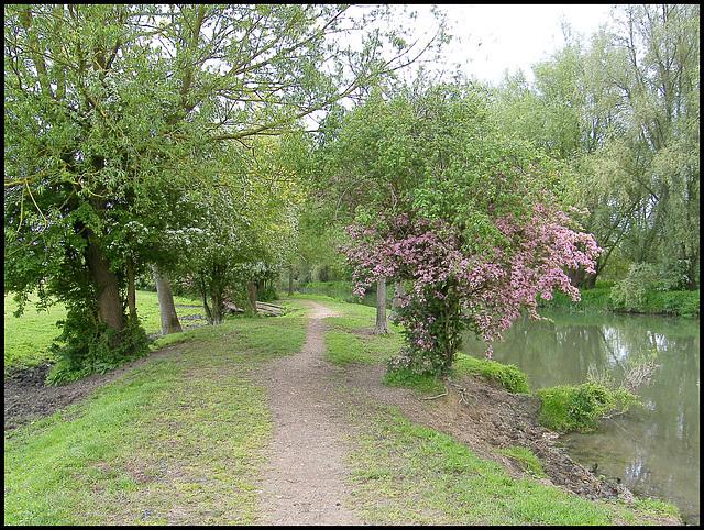 springtime at Willow Walk