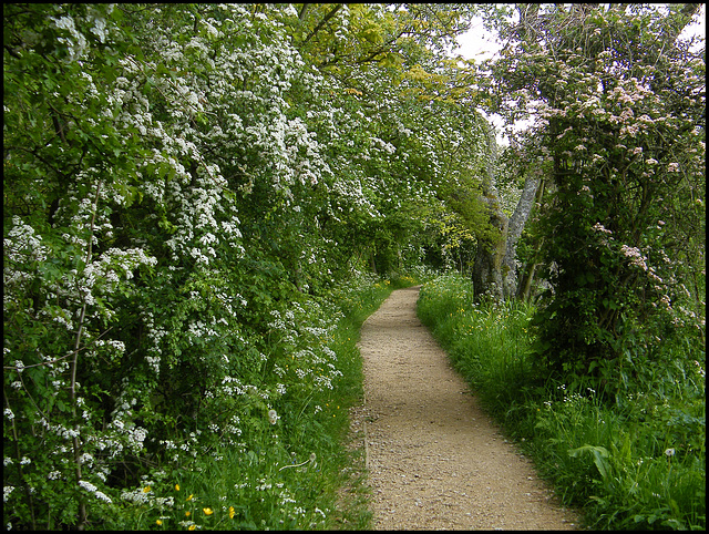 path in May