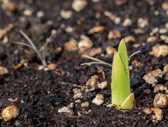 seedlingglad