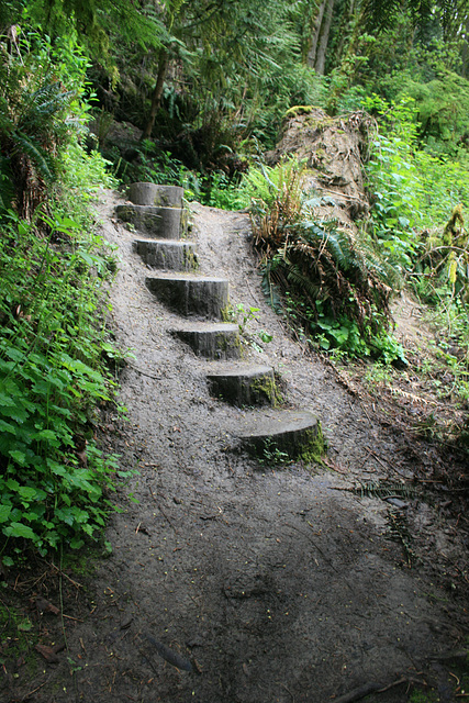Steps on the trail