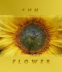 ☼ flower